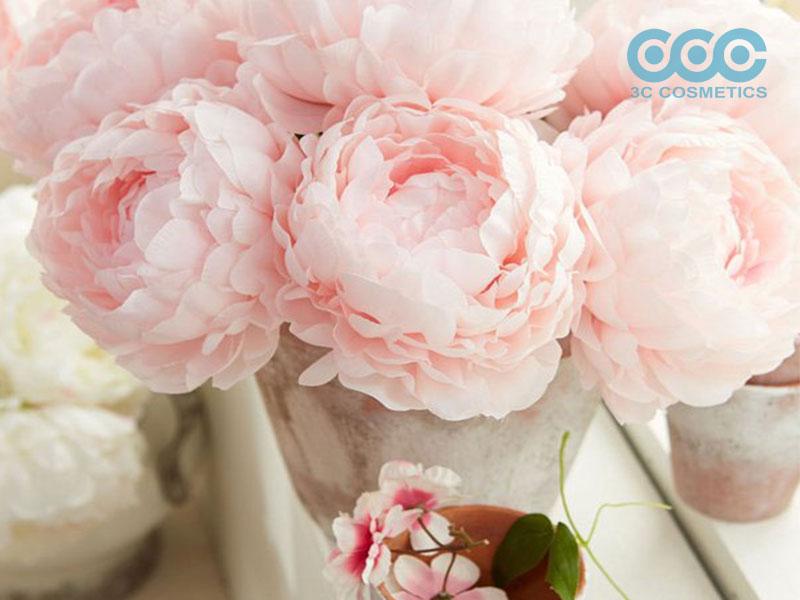 Chăm sóc da khỏe đẹp nhờ chiết xuất hoa mẫu đơn
