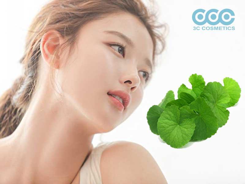 Chiết xuất từ rau má giúp dưỡng da trắng sáng