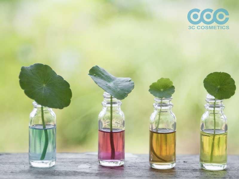 Chiết xuất rau má trị thâm nám da
