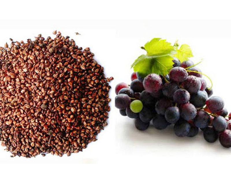 Chiết xuất hạt nho